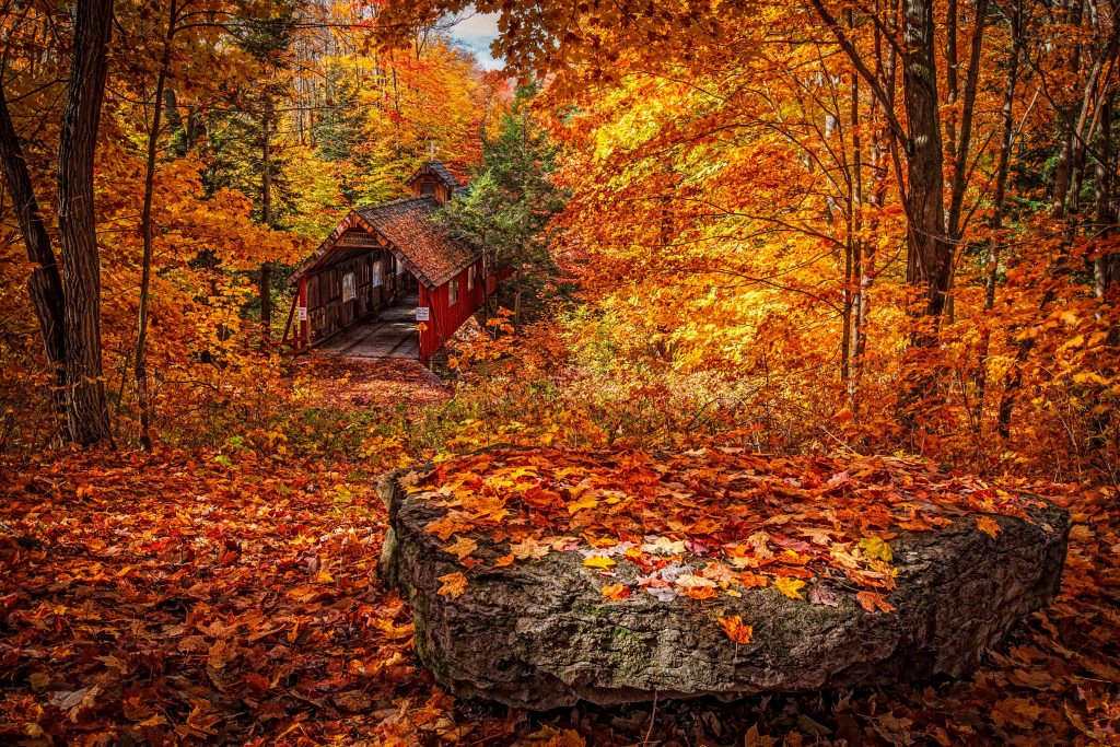 Image shows a woodland scene in Autumn to show the beauty of trees and their colours in Autumn
