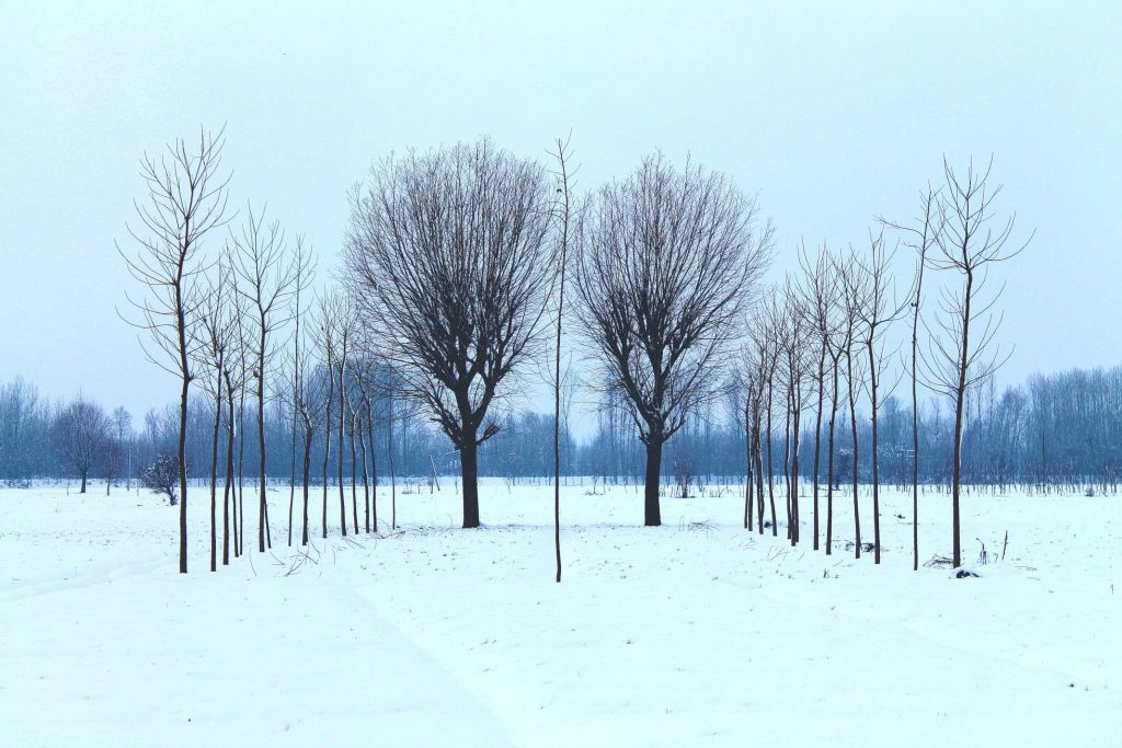 Image shows leafless trees in a Winter landscape to show how different trees are in Winter